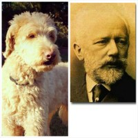 Celebrity Lookalike Dogs